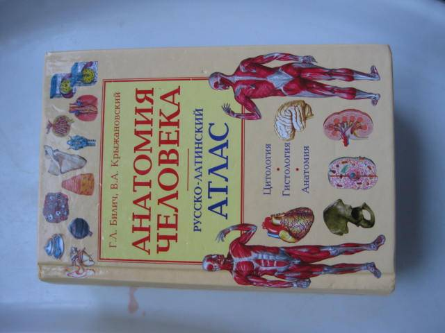 Иллюстрация 1 из 15 для Анатомия человека. Русско-латинский атлас. Цитология. Гистология. Анатомия - Билич, Крыжановский | Лабиринт - книги. Источник: Алёна