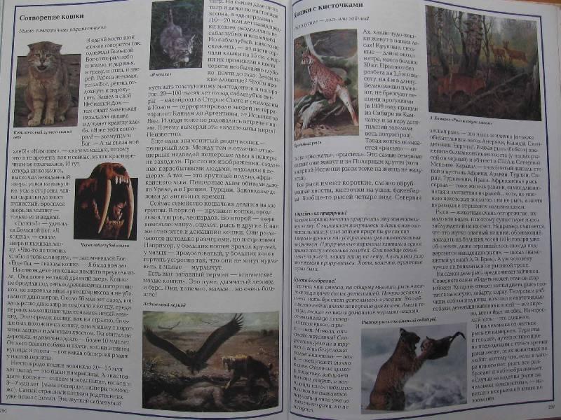 Иллюстрация 1 из 15 для Загадки кошек - Светлана Лаврова | Лабиринт - книги. Источник: Red cat ;)