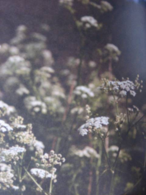 Иллюстрация 1 из 13 для Что растет на лугу - Гудрун Хоффман   Лабиринт - книги. Источник: Afina