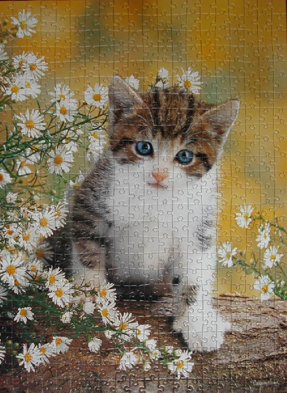 Иллюстрация 1 из 2 для Puzzle-500. Котенок (В-50840)   Лабиринт - игрушки. Источник: Kanien'Kahake