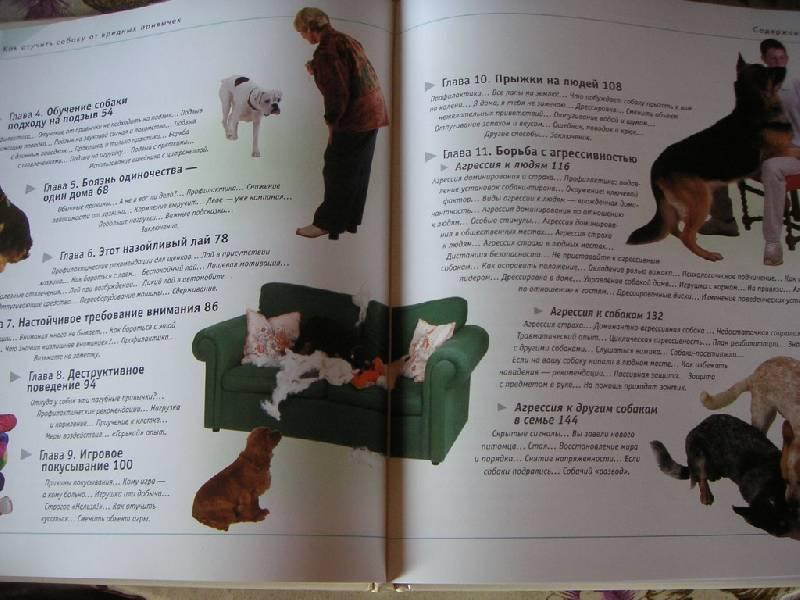 Иллюстрация 1 из 42 для Как отучить собаку от вредных привычек - Колин Теннант | Лабиринт - книги. Источник: kisska