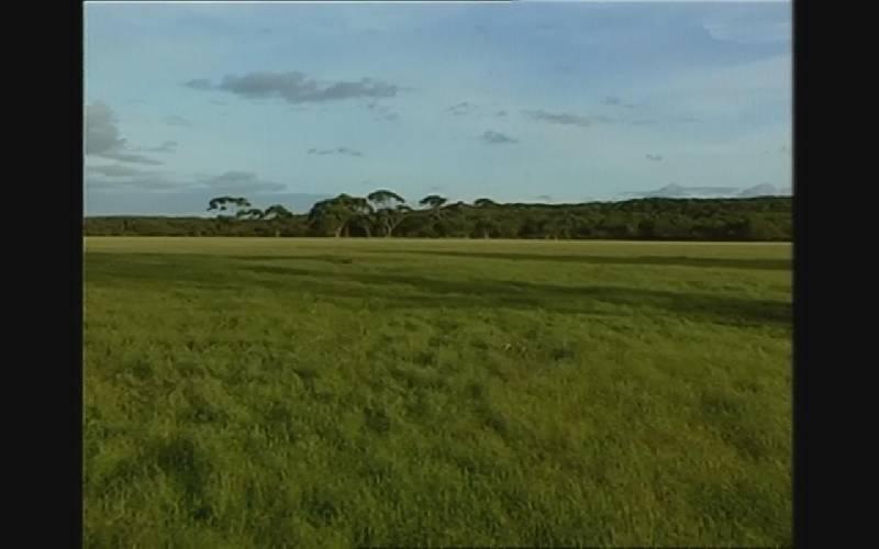 Иллюстрация 1 из 15 для В дебрях тропической Австралии (DVD) | Лабиринт - видео. Источник: Red cat ;)