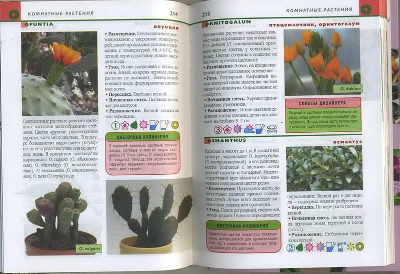 Справочник цветов комнатных с