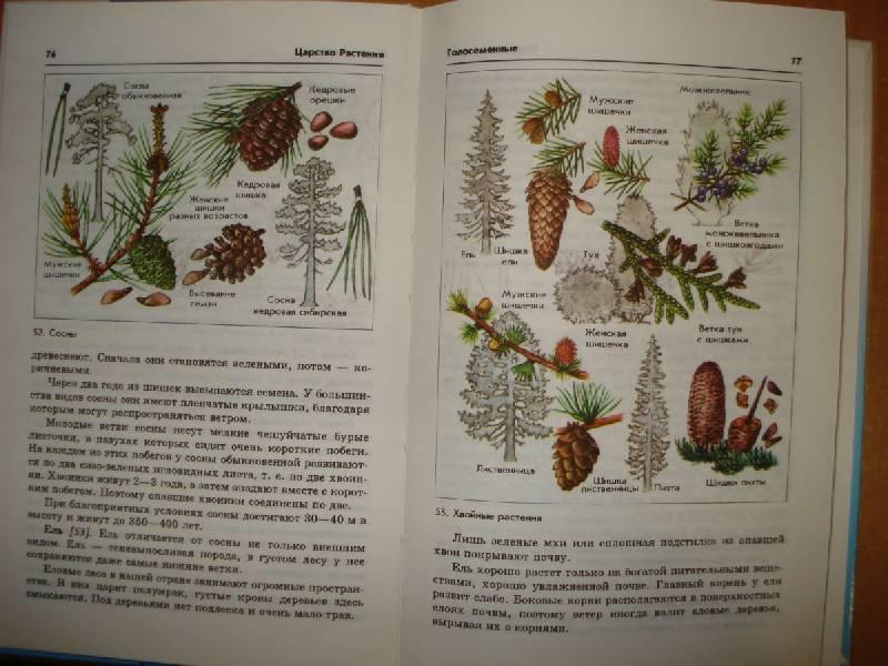 Иллюстрация 4 из 31 для книги биология