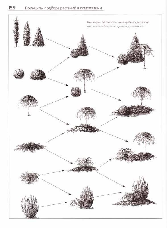 садовые композиции - Елена