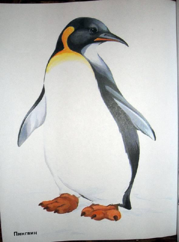животные севера картинки с названием