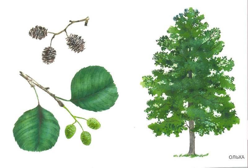 деревья в картинках для детей