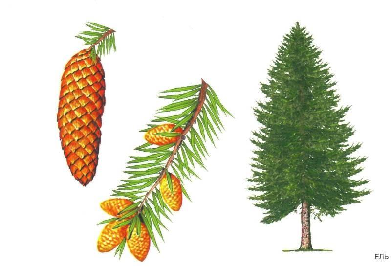 11 из 32 для расскажите детям о деревьях