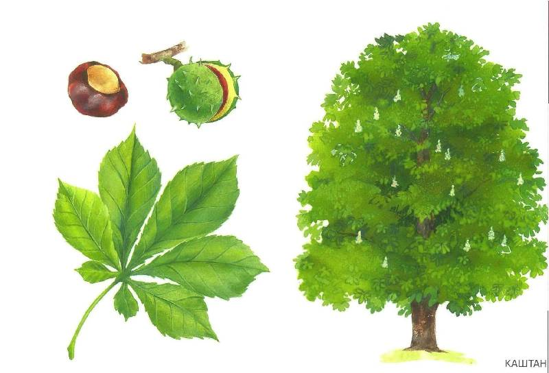 13 из 32 для расскажите детям о деревьях