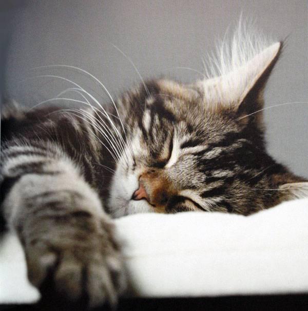 Иллюстрация 1 из 33 для Кошачьи медитации - Дэвид Байрд   Лабиринт - книги. Источник: Rita_li