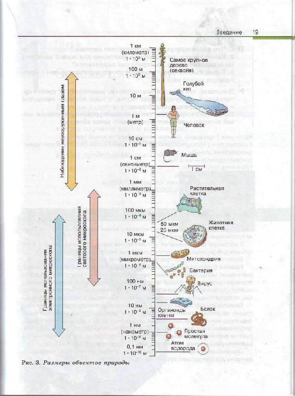 Иллюстрация 4 из 35 для биология общая