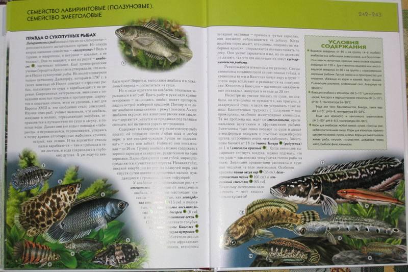 Иллюстрация 19 из 21 для Аквариумные рыбки. Полная ...: http://www.labirint.ru/screenshot/goods/181070/19/