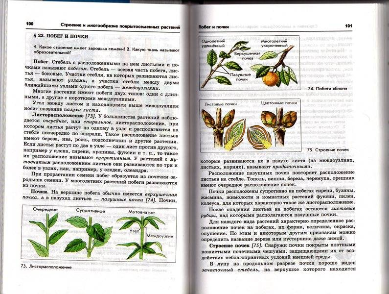 Биология бактерии грибы растения