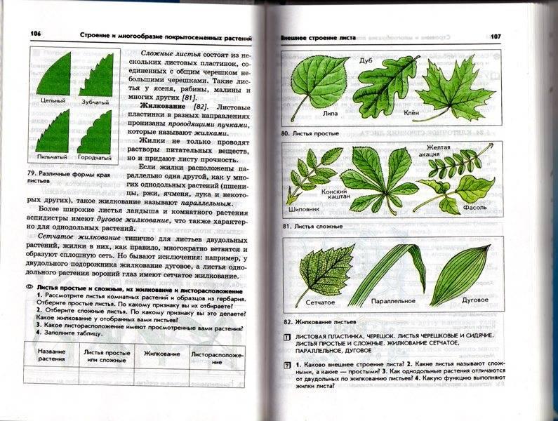 Биология бактерии грибы растения 6