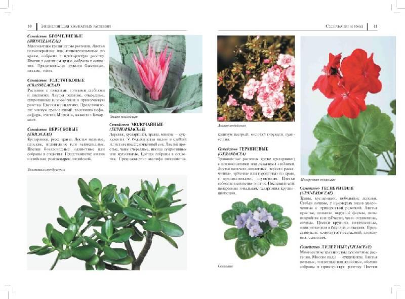 Каталог цветов с описанием и