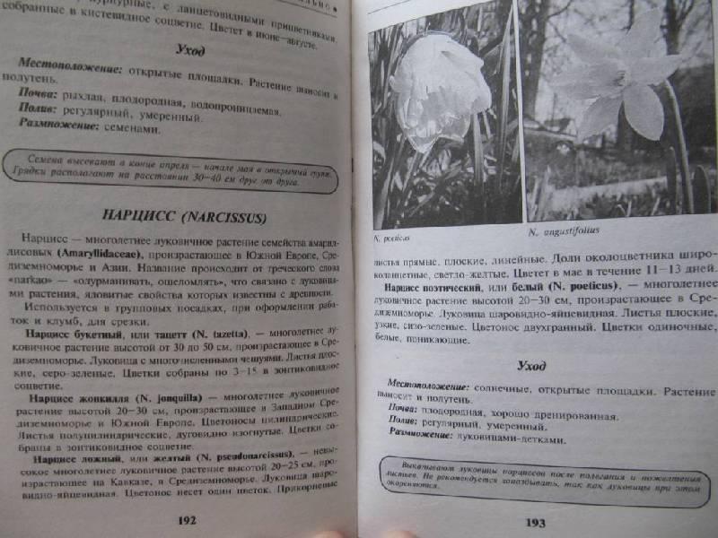 Иллюстрация 1 из 4 для Великолепный сад: быстро, легко, стильно - Юлия Маскаева | Лабиринт - книги. Источник: _Irina_