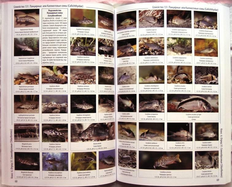 Иллюстрация 1 из 11 для Энциклопедия аквариумных рыб | Лабиринт - книги. Источник: Луговая Собачка