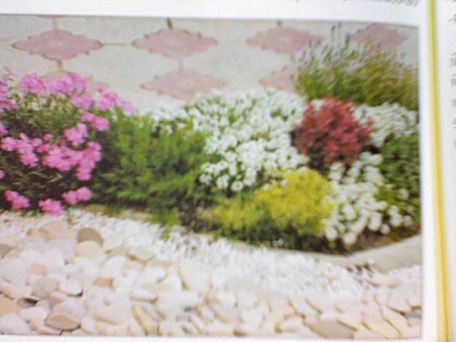 Цветочное оформление дачного участка фото