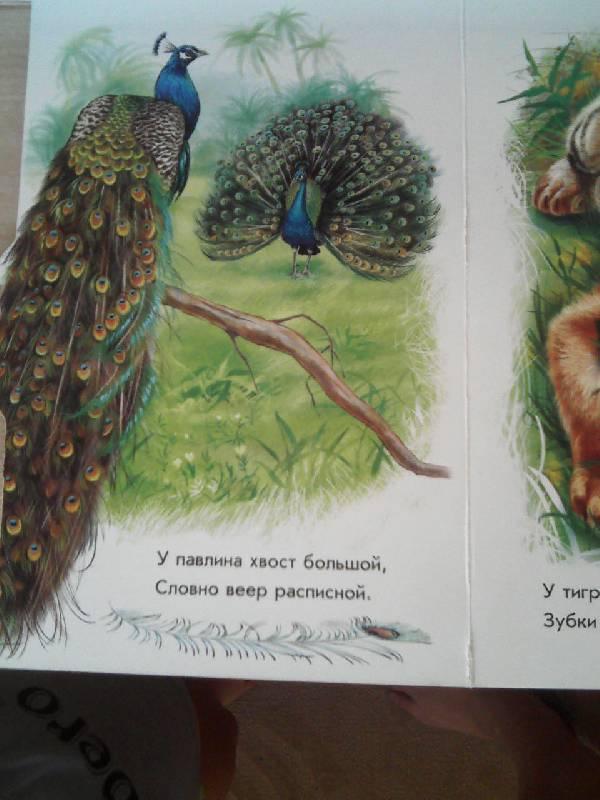 Иллюстрация 1 из 19 для В джунглях - Олеся Квитка | Лабиринт - книги. Источник: Irbis
