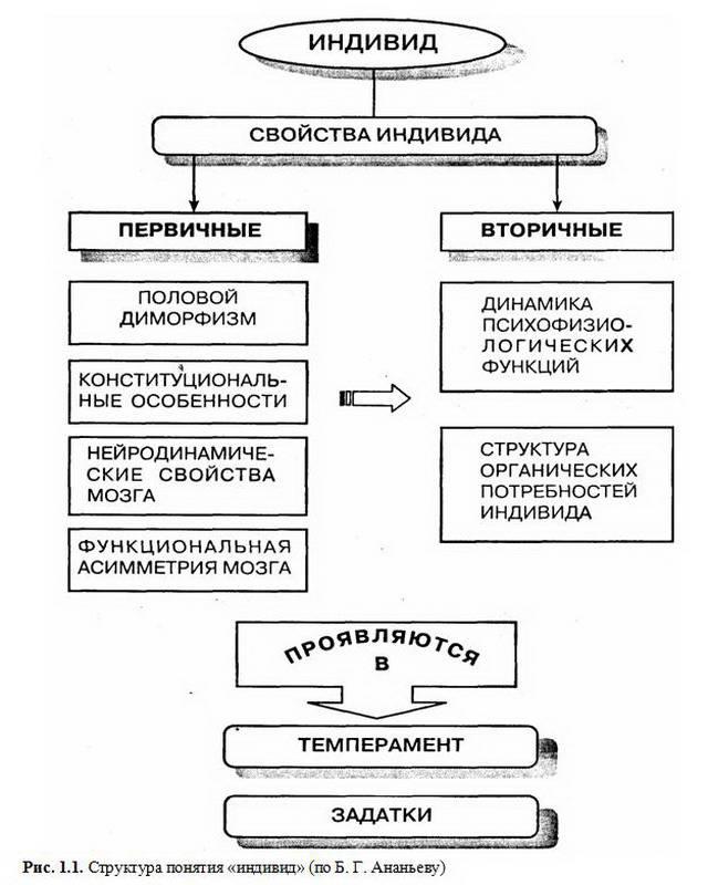 """Структура понятия  """"индивид """" (по Б. Г. Ананьеву).  Глава 1. Предмет психологии, ее задачи и методы * 1 5."""