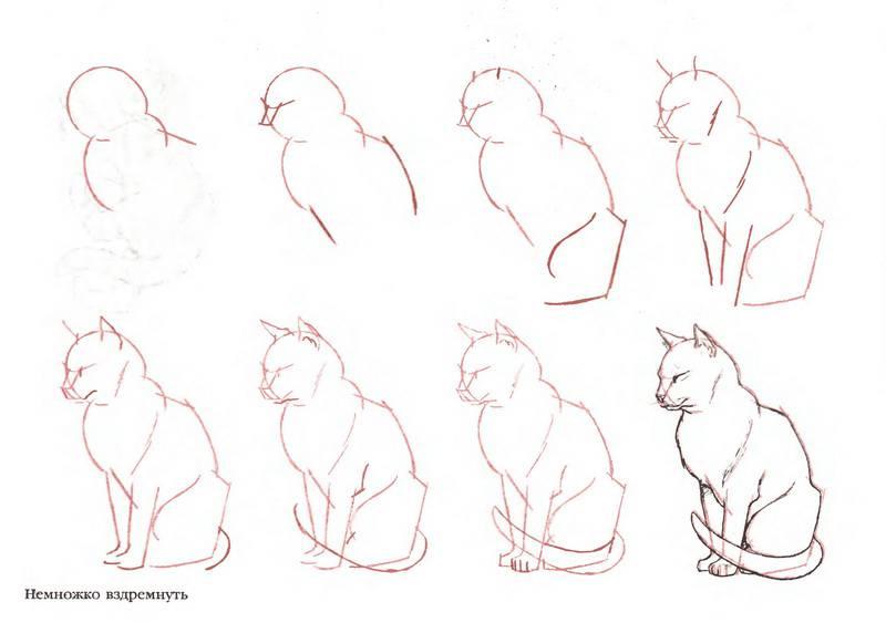 Вот, например, как нарисовать кошку поэтапно.  Вот рисунок кошки карандашом.