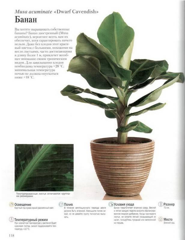 Иллюстрация 33 из 47 для Иллюстрированная энциклопедия комнатных растений - Пол Вильямс Лабиринт - книги.