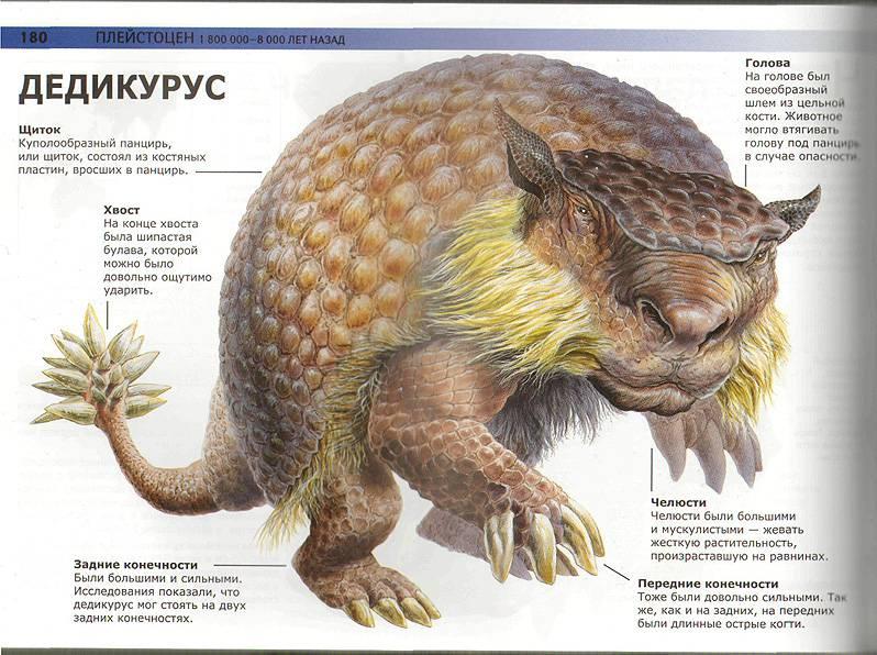 Иллюстрация 4 из 13 для книги динозавры