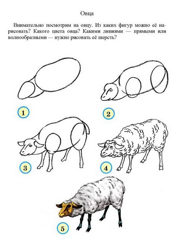 Из каких фигур можно её нарисовать.  Какого цвета овца.  Какими линиями - прямыми или волнообразными - нужно рисовать...