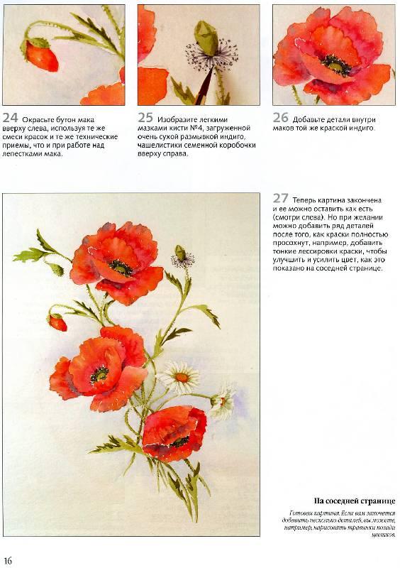 """Иллюстрация 20 к книге  """"Рисуем по схемам.  Цветы.  Акварель """", фотография, изображение, картинка."""