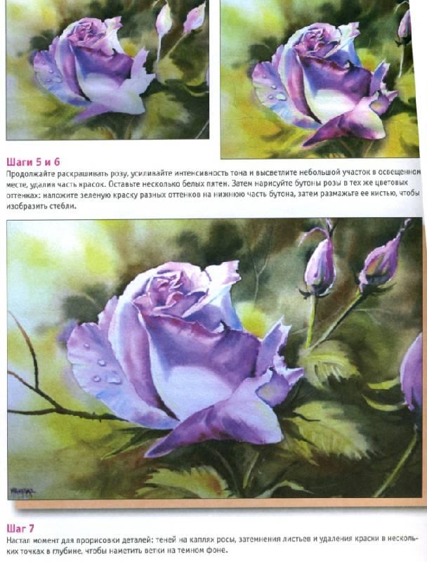 Иллюстрация 4 из 11 для розы акварель