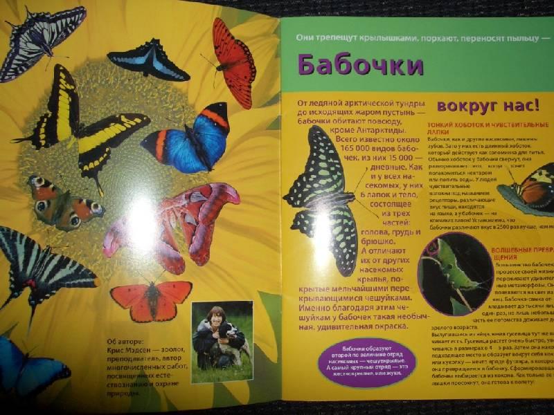 Иллюстрация 1 из 3 для Бабочки. Книжка со светящимися наклейками   Лабиринт - книги. Источник: sher