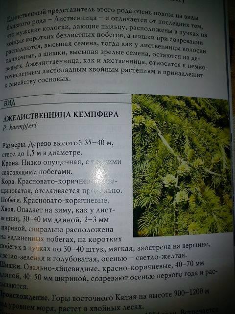 Иллюстрация 1 из 6 для Хвойные растения - Лилиан Плотникова   Лабиринт - книги. Источник: Бусёк