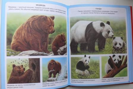 Лучшие книги про животных для детей