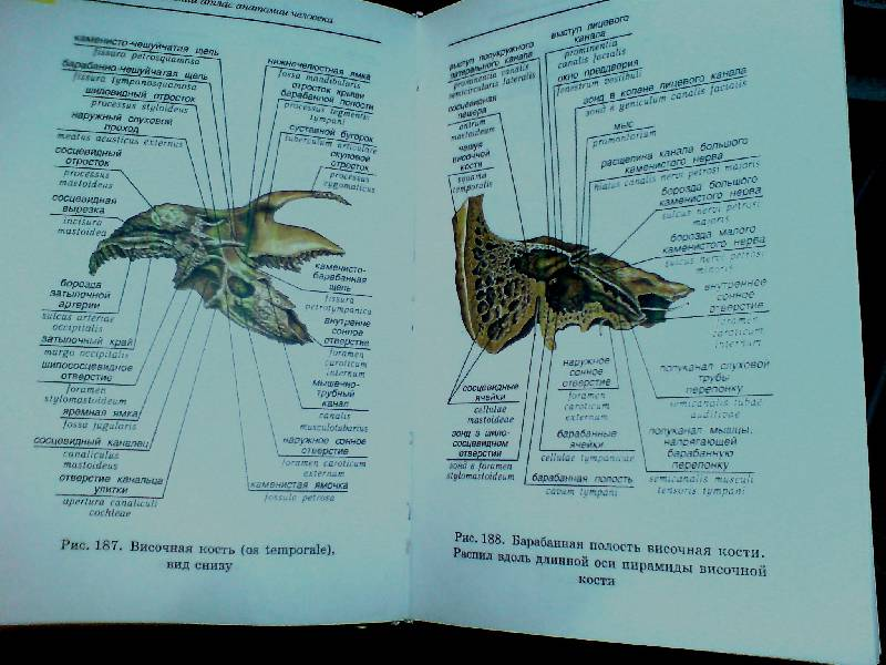 Учебник Анатомия И Физиология Человека Гайворонский