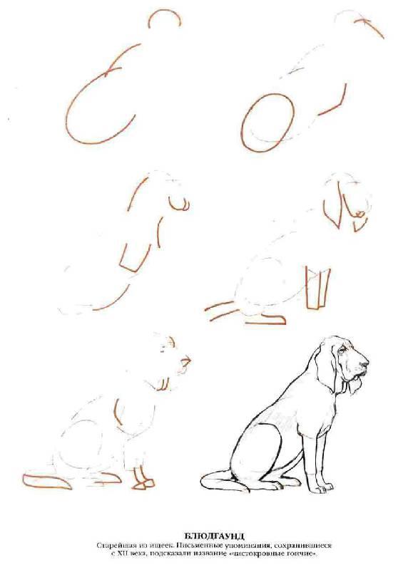 Как нарисовать пасть собаки - Demiart.
