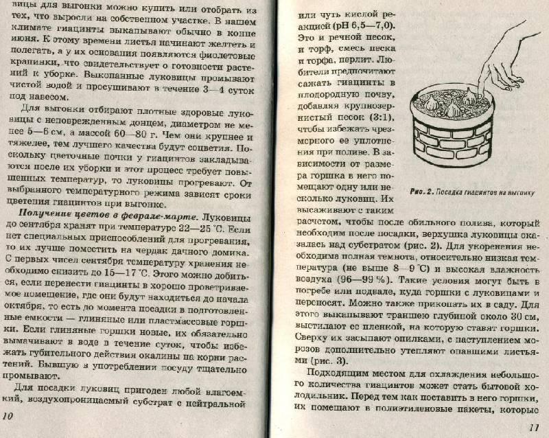 Иллюстрация 1 из 3 для Выгонка растений - Людмила Завадская | Лабиринт - книги. Источник: ТТ
