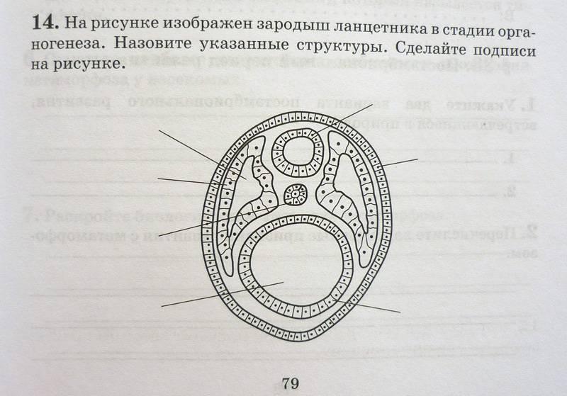 Иллюстрация 5 из 6 для биология общие