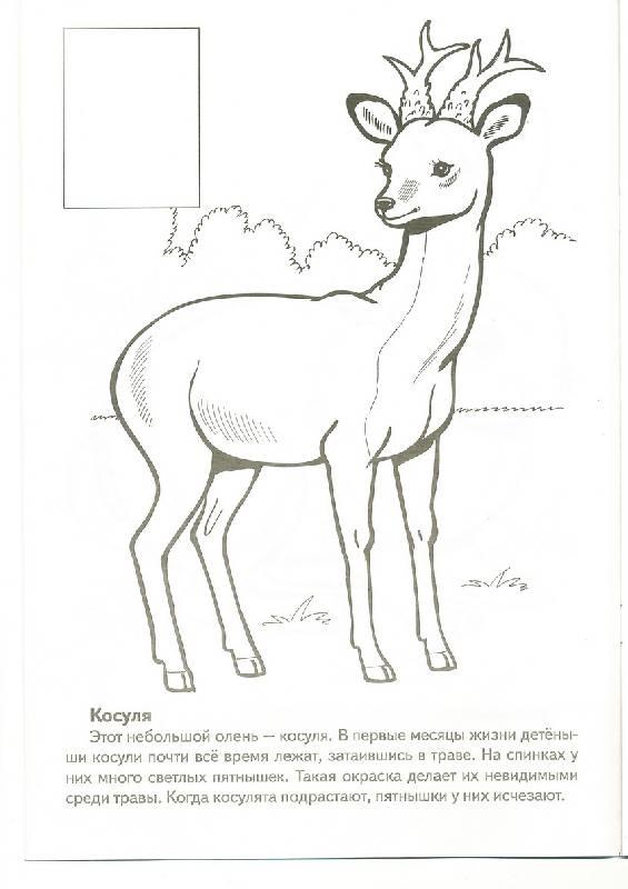 Раскраски животные из красной книги россии