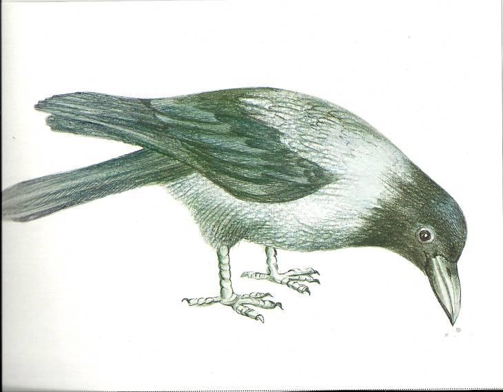 Выпуск 9. Домашние, перелетные, зимующие птицы - Наталия Нищева.