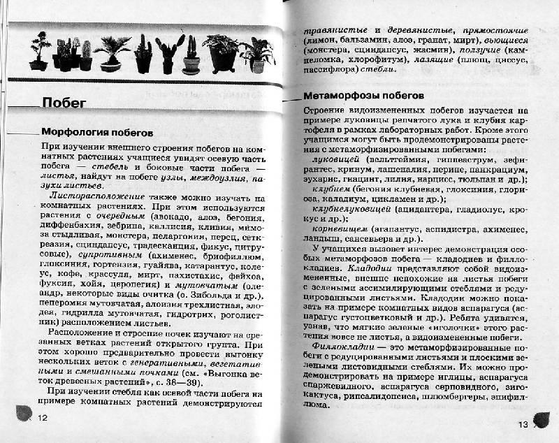 Из 8 для книги комнатные растения