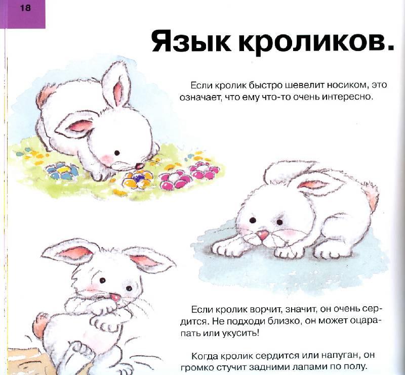 Декоративные кролики содержание и уход в домашних условиях