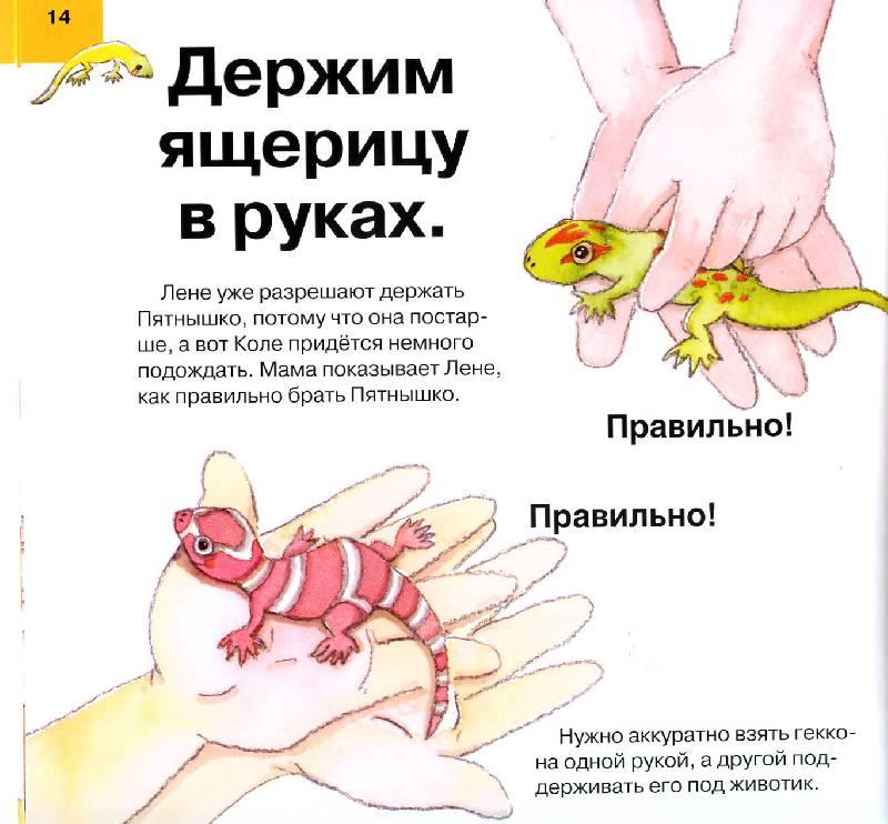 Как ухаживать в домашних условиях за ящерицами в домашних условиях