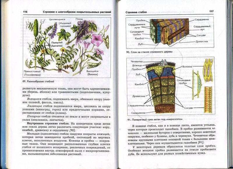 Решебник по биологии 6 класс Пасечник