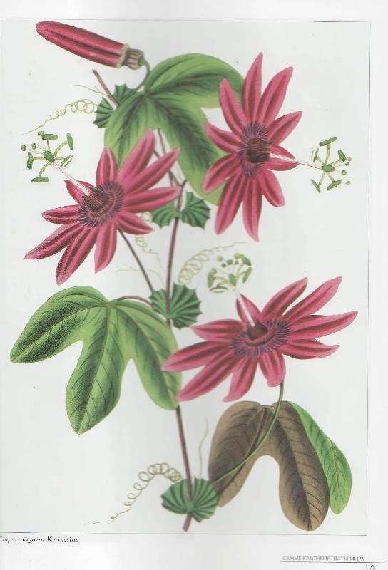 45 для книги самые красивые цветы мира