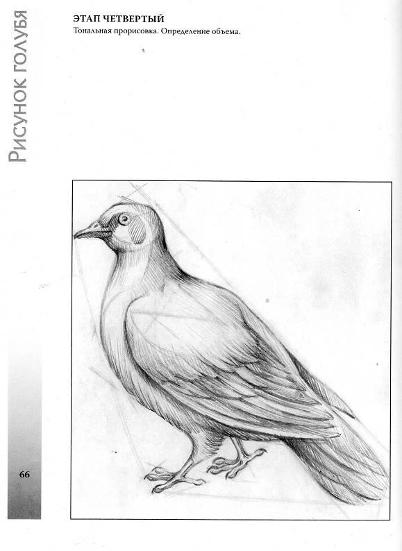 Нарисованные открытки карандашом с