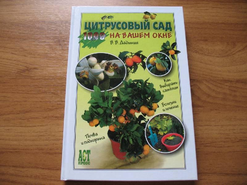 Иллюстрация 1 из 13 для Цитрусовый сад на вашем окне - Венедикт Дадыкин | Лабиринт - книги. Источник: tayana