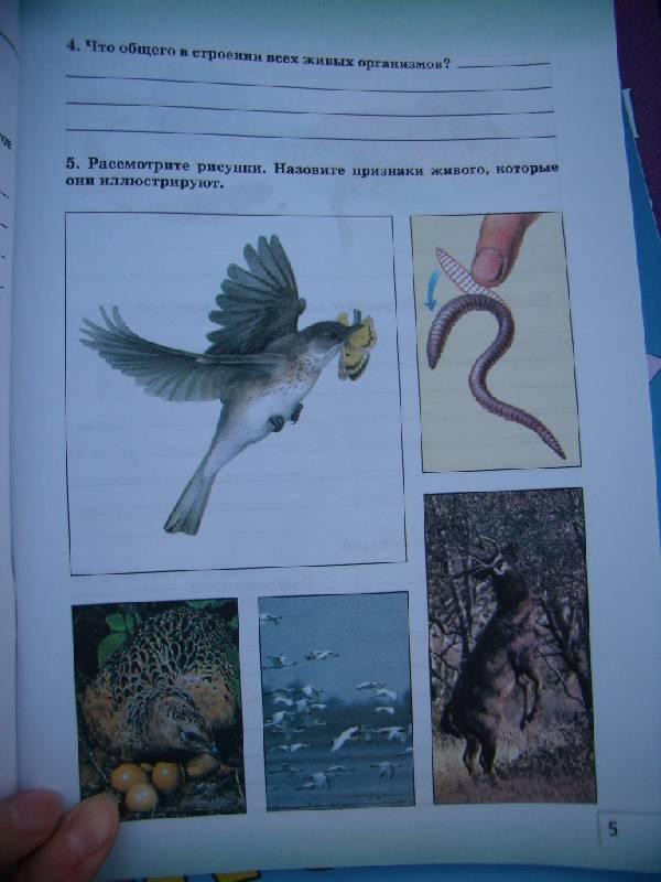 Иллюстрация 28 из 32 для биология живой
