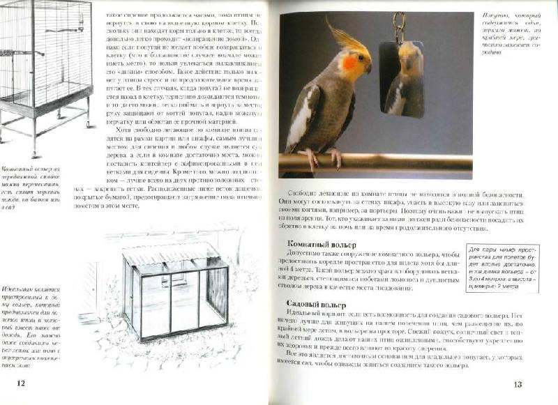 Корелла попугай уход и содержание самца