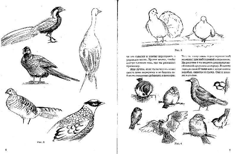 Иллюстрация 4 из 6 для как нарисовать