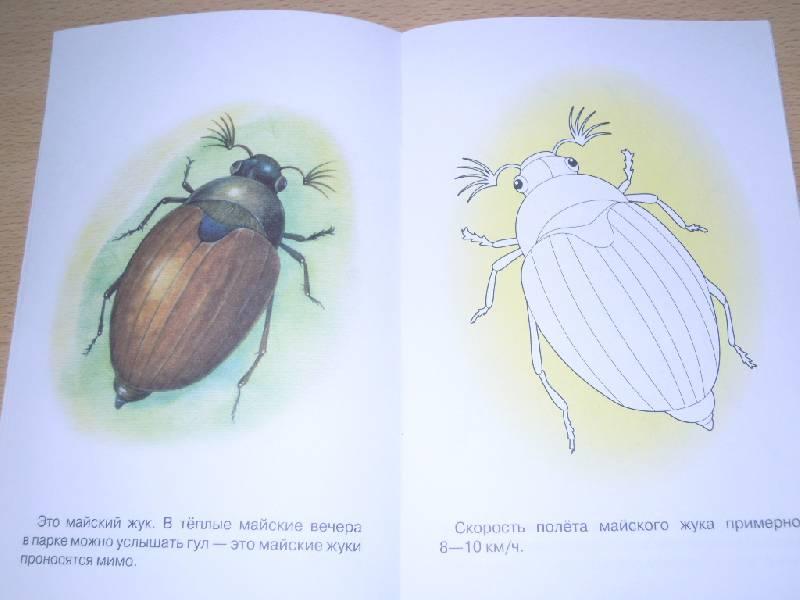 Из 9 для раскраска насекомые